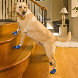 Power Paws Dog Socks - Help with Slippery Floors and Stairs