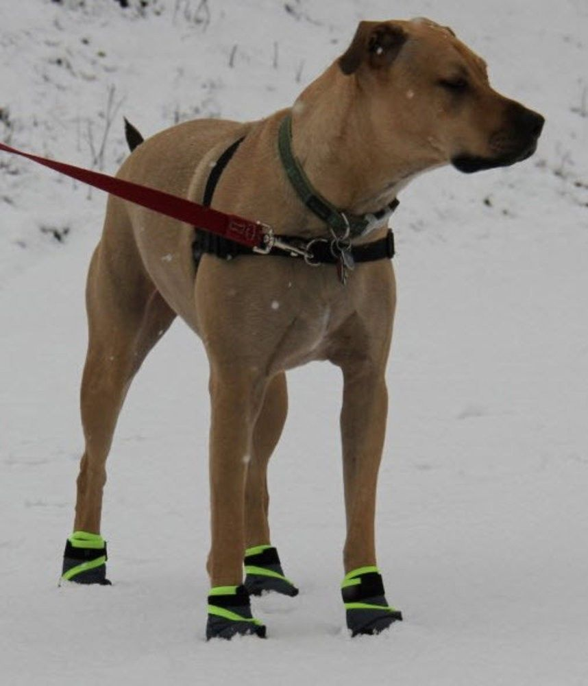 Can Dogs Get Rug Burn On Their Paws: Dog Shoes, Boots, Socks And Paw Protection