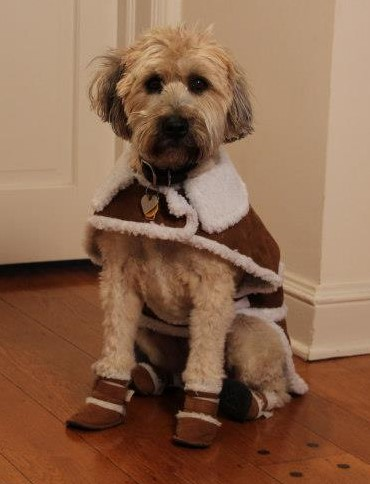 Dog Shoes Boots Socks And Paw Protection ShopForPuppy - Dog booties for hardwood floors