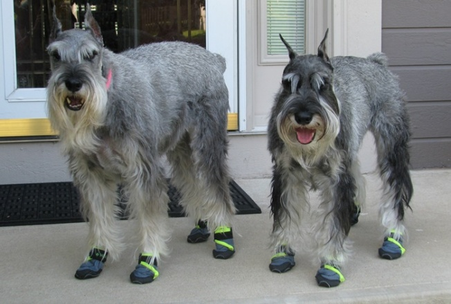 Healers-Urban-Walkers-Dog-Boots