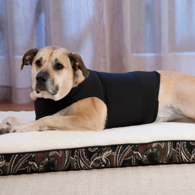 Zendog-Calming-Compression-Shirt-Large