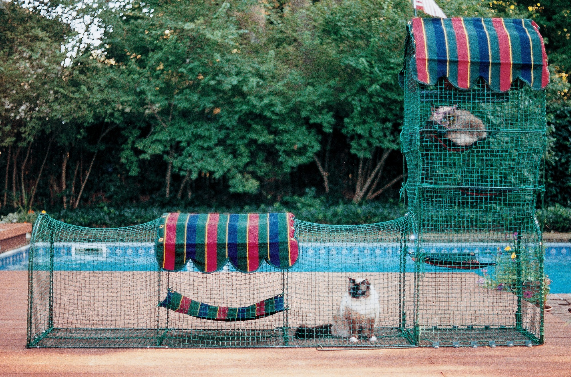 Backyard Enclosures For Dogs : Kittywalk Town and Country Collection Pet Enclosure  ShopForPuppy