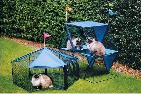 kws105-110-Kittywalk-Carnival-cat
