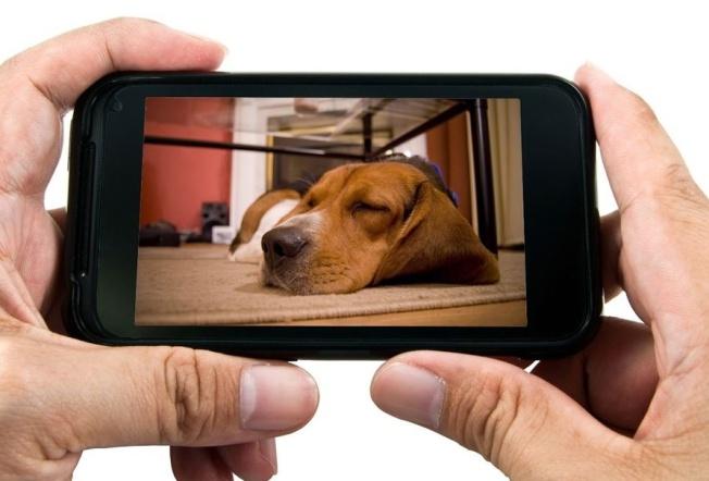 N-3992-Eyenimal-Pet-Vision-Live-Smartphone