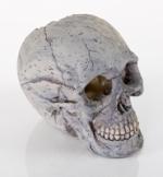 BioBubble Human Skull
