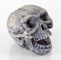 BioBubble Small Human Skull